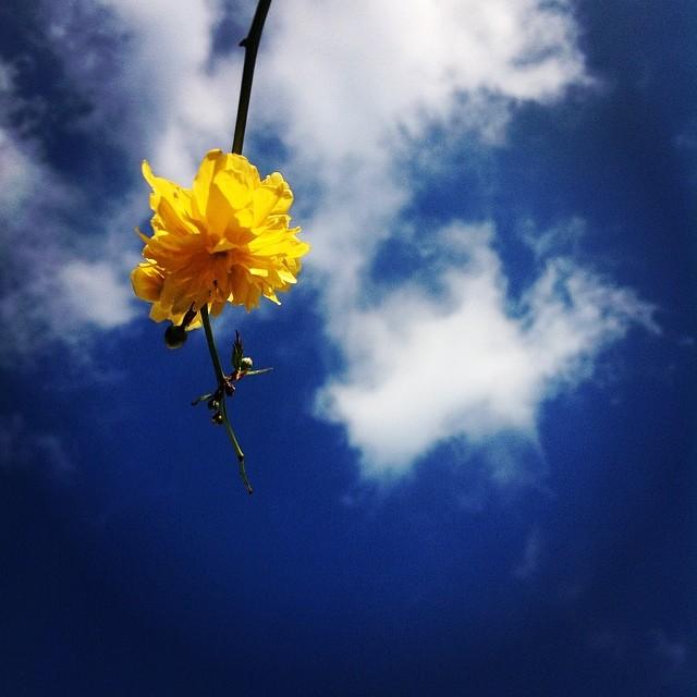 beautiful day (1) - ©Bert Vanden Berghe - march 16 2014