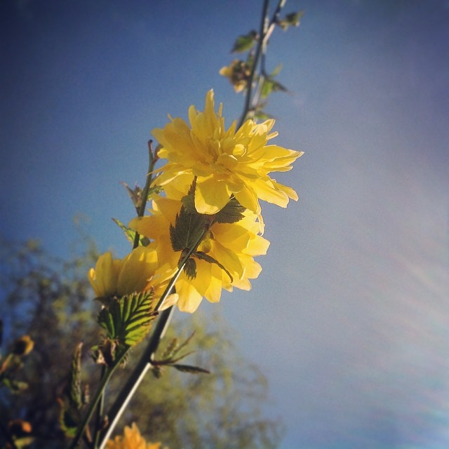 beautiful day (2) - ©Bert Vanden Berghe - march 16 2014