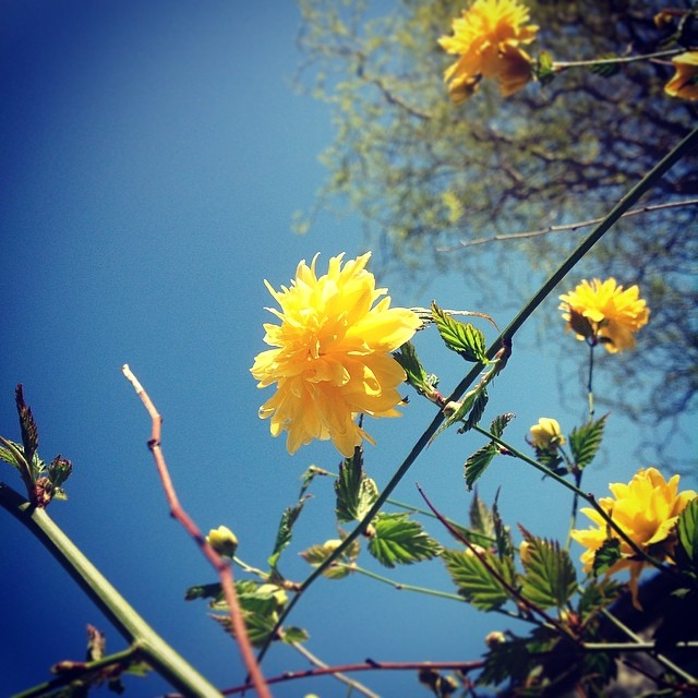 beautiful day (3) - ©Bert Vanden Berghe - march 16 2014
