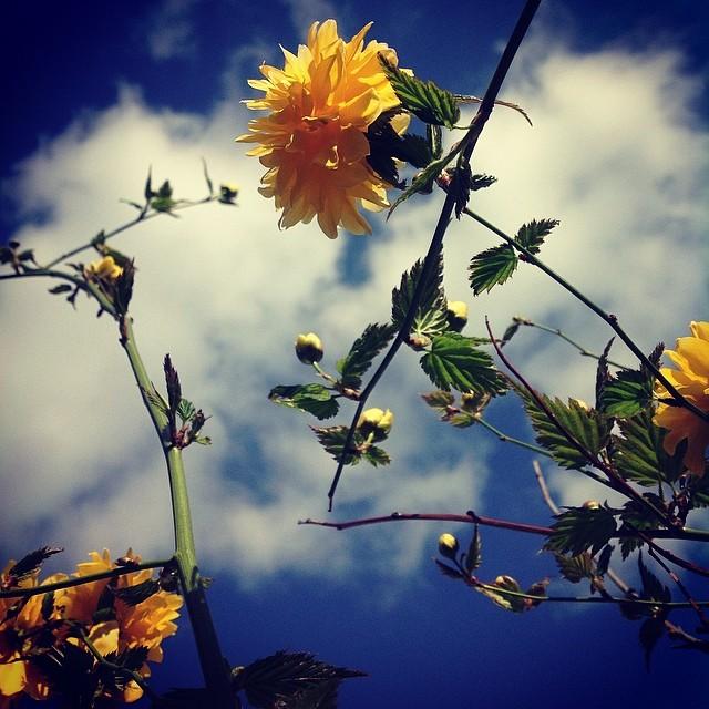 beautiful day (4) - ©Bert Vanden Berghe - march 16 2014