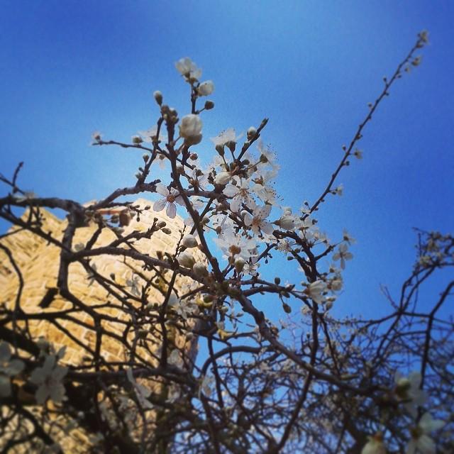 Springtime! Foto © Bert Vanden Berghe - 2014